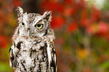 bored owl calmly looking around its surroundings