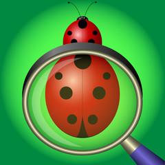 ladybug under magnifying glass on green background