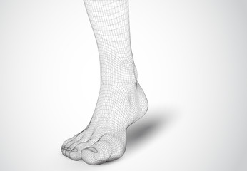 3d illustration of a vector of human feet walking along