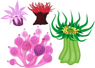 Set of different species of sea anemones on white background