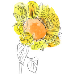 vector drawing sunflower