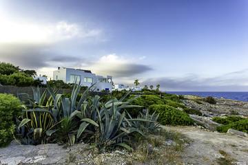 Agava and white villas at the coastline in Cala d'Or, Mallorca, Spain