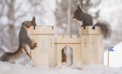 red squirrels with a castle in a winter