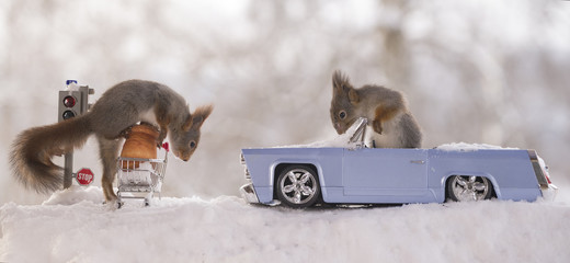red squirrels with traffic light, shopping cart and car