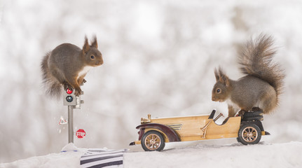 red squirrels on a traffic light and on a car
