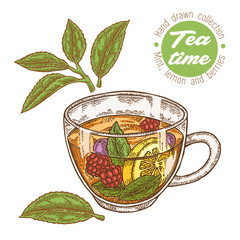 Hand drawn cup of tea. Herbal tea with lemon, mint and raspberry isolated on white. Vector illustration. Design for packaging.