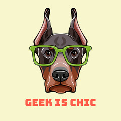 Doberman Pinscher Face in a geek glasses. Smart  illustration isolated