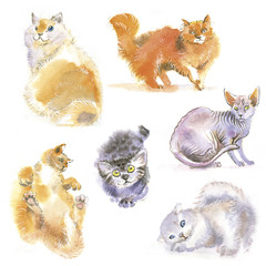 many watercolor cats