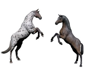 Couple of white horse on white background - 3d rendering