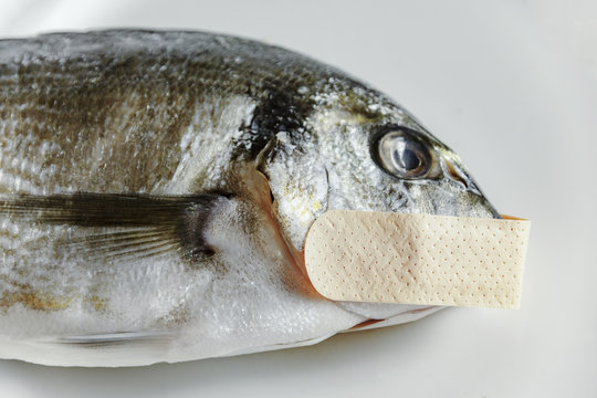 A dead fish tells no tales if it's got a patch on its mouth (old saying). Symbolic close-up shot: mute as a, censored.