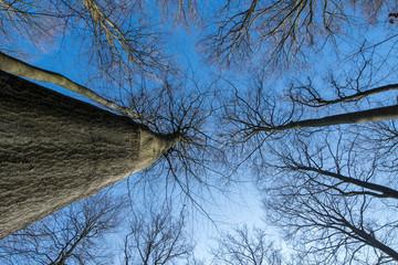 Wald und Himmel