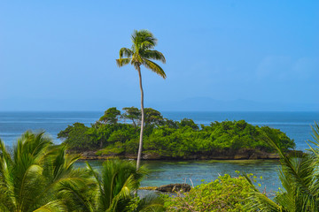 View over palms to a little no named tropical island, one big palm in front of the isle, blue sky, Dominican Republic