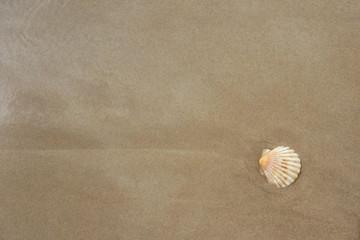 muszelka na piasku w widoku z góry