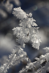 Winter picture./The thick layer of brilliant hoarfrost on dry runaways makes impression of a holiday.