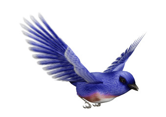 3D Rendering Eastern Bluebird on White