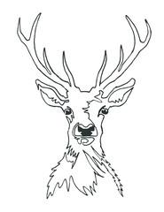 A portrait of a deer, continuous line