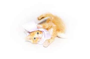 Rudy kot bawi się szalikiem - Red cat playing with a scarf