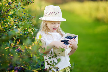 Cute little girl picking fresh berries on organic blueberry farm on warm and sunny summer day. Fresh healthy organic food for kids.