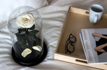 White rose in a flask. Long-lasting rose