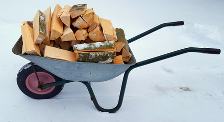 Wood of beech in wheelbarrow