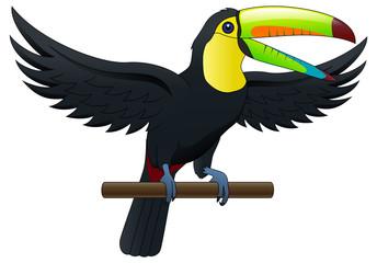 Cute bird toucan. Cartoon isolated on white background. Vector illustration