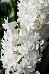 Bonita flor branca