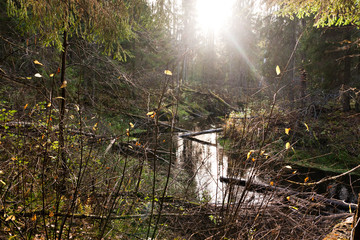 Wild forest river in the north of Karelia at sunset