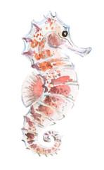 Watercolor cute seahorse illustration