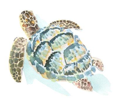 Watercolor illustration of a swimming sea turtle.