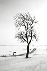 Bare tree along winter road