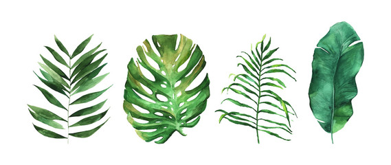 Four beautiful tropical leaves vector illustration isolated on the white background. Hand drawn leaves illustration in watercolor technique.  Fotoväggar