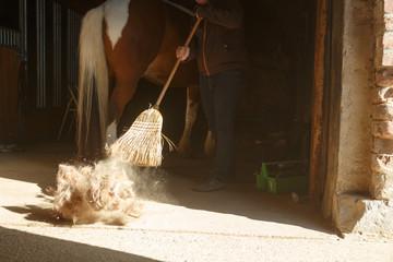 Fototapeta Pferdepflege