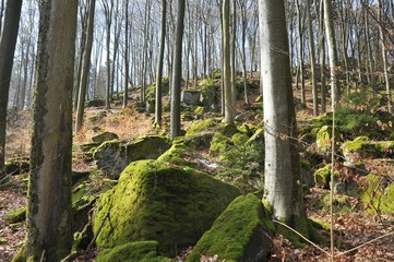 Typischer mit großen vermoosten Granit-Felsblöcken übersäter Abhang im Buchenhochwald des Odenwaldes im zeitigen Frühling, Lindenfels, Hessen, Deutschland