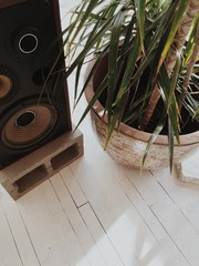 A speaker and houseplant on a white floor