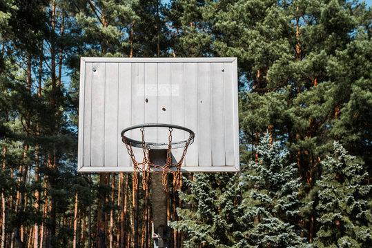Basketball hoop amongst trees.
