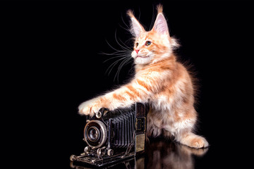 Cute maine coon kitten with ola camera on black background, photographer, isolated.