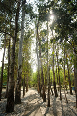 path of forest trees