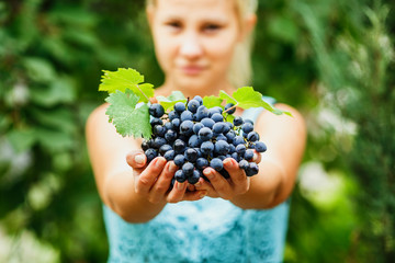 the girl treats and offers fresh juicy ripe grapes