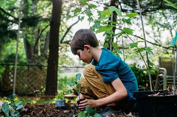 Boy Gardener