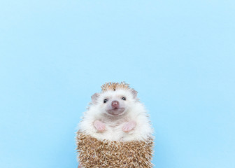 Hedgehog with white space above head for type