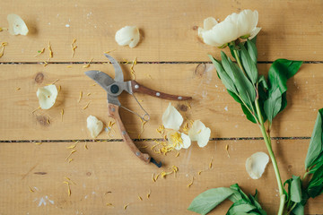 Peony and pruner on a table