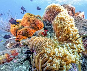Foto op Aluminium Onder water Coral reef off coast of Bali