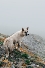 Wild dog in mountains
