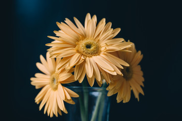 Yellow daisies in a vase