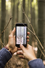 Man taking a picture with his phone of the bamboo forest.