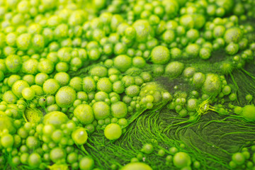 Macro detail of green algae