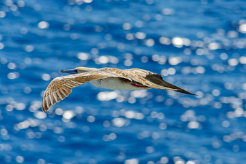 Top view of seagull flies over the sea.