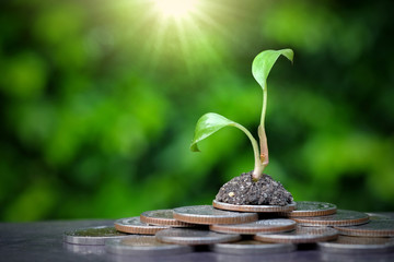 Tree growing on pile of coins .Business and Financial Growth Concepts