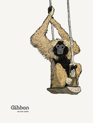 Gibbon monkey sketch vector graphic  drawing.