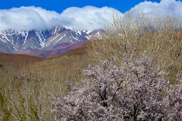 アトラス山脈とアーモンドの花